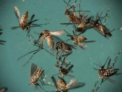 Alagoas registra aumento de 137% nos casos de dengue,  34% de Zika e 70% chikungunya.