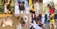 Brasil tem mais de 170 mil animais abandonados sob cuidado de ONGs